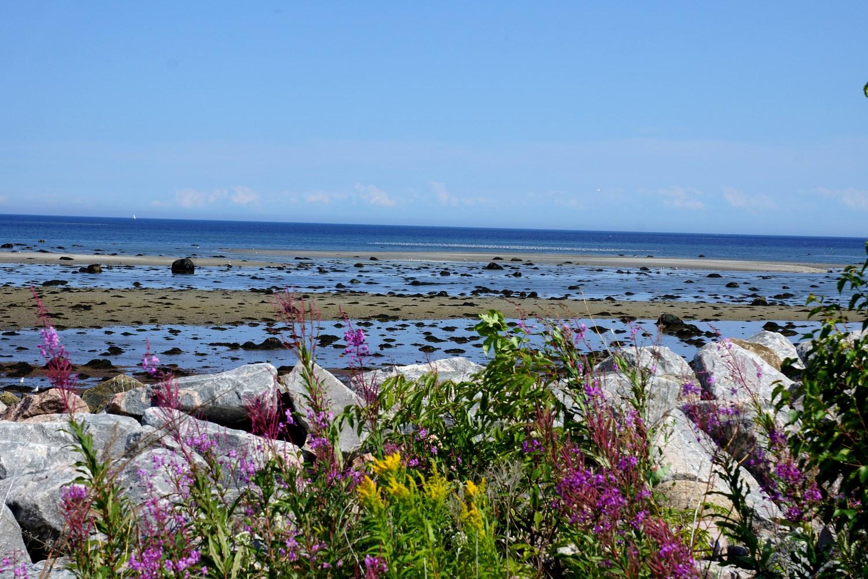 A marée basse, le paysage change complètement