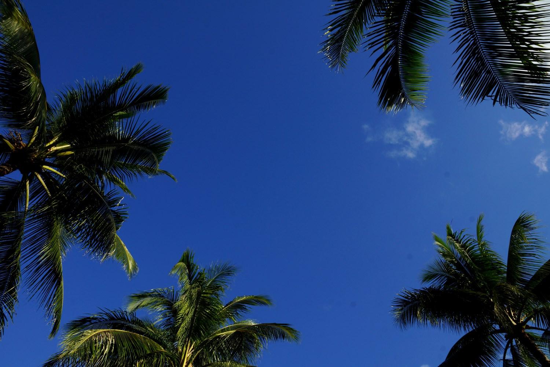 J'adoooore les palmiers !